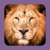 Sasol Soogdiere vir Beginners (Volle weergawe): Blitsfeite, foto's en video's van 46 Suider-Afrikaanse diere