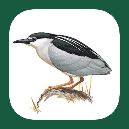 eGuide to the Handbook of Bird Identification for Benelux