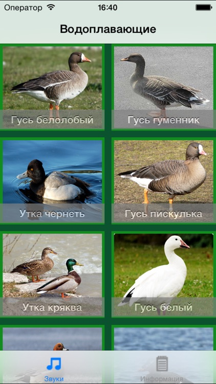 Call Bird