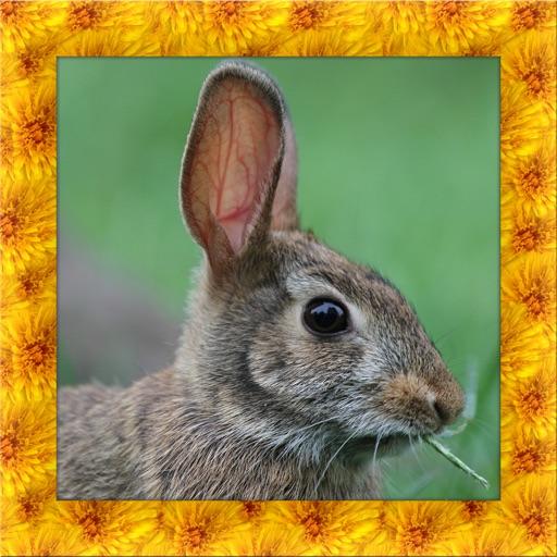 Wild Rabbit Simulator 3D