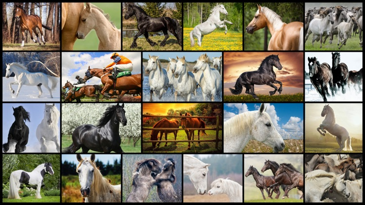 Mighty Horses - Real Horse Picture Puzzle Games for kids