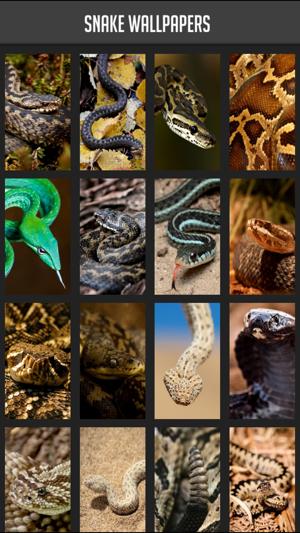 Snake Wallpaper on the App Store