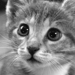 Cat Wallpapers: Retina Display HD Backgrounds