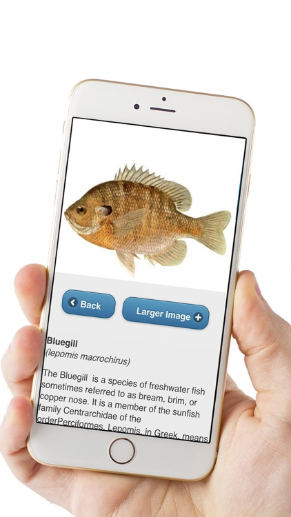 Fish ID Pro screenshot-1