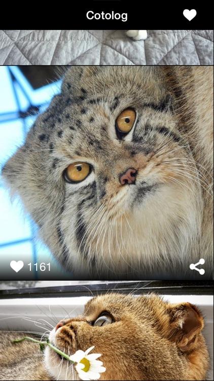 Daily cat photos - Cotolog