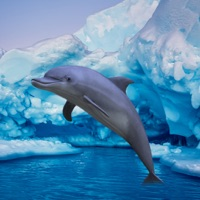 Codes for Antarctic Dolphin Escape Hack