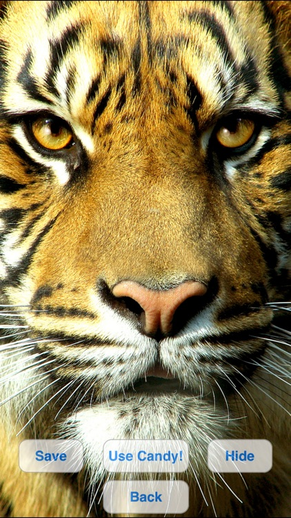 Wild Cats Slideshow & Wallpapers