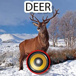 Real Deer Hunting Calls & Sounds