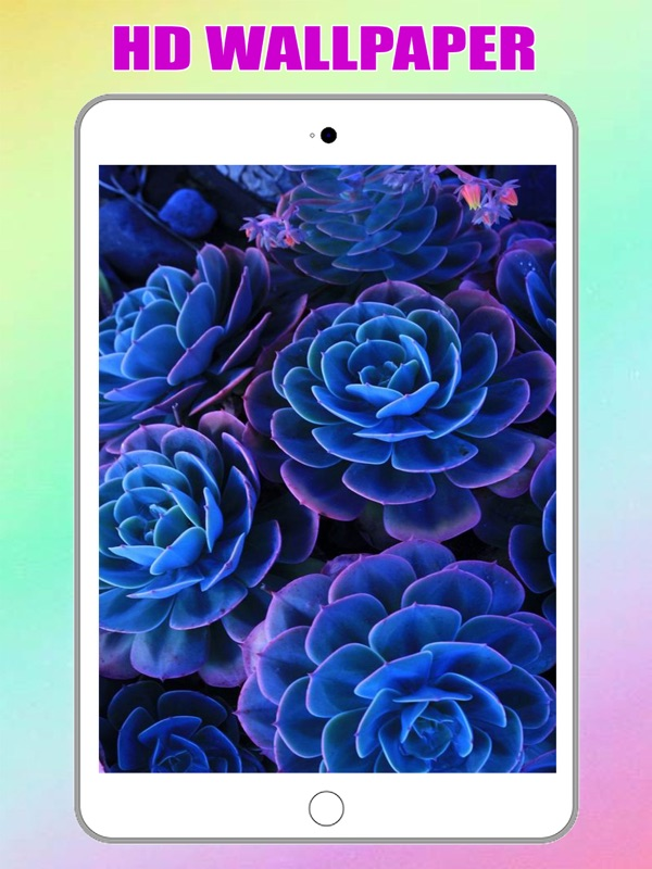 Flower Wallpaper Background For Iphone And Ipad Online Hack Tool