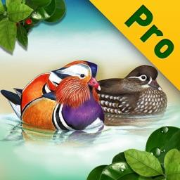 Birds of Korea Pro