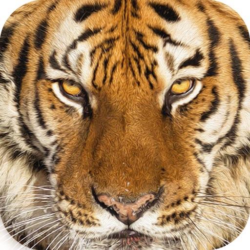 Wildlife Quest Ultimate Tiger