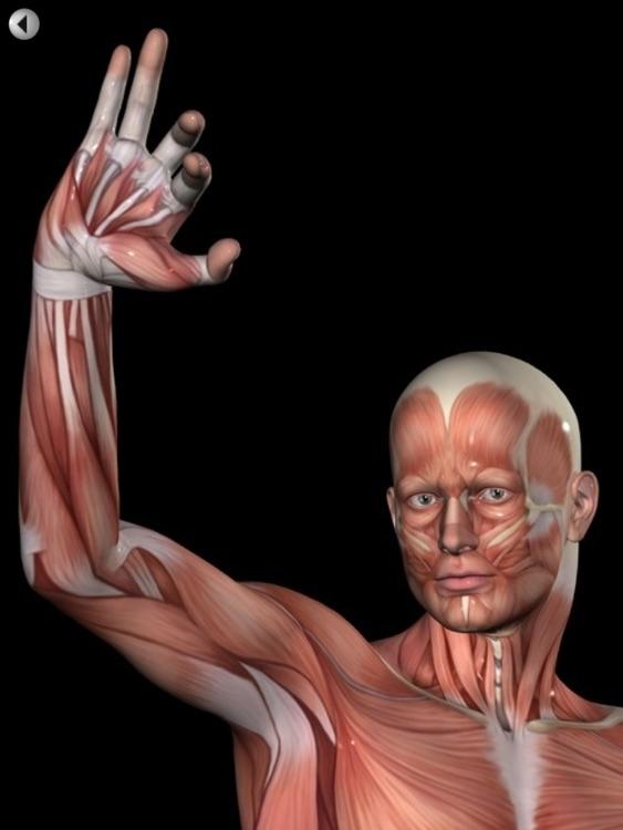 360 Anatomy for Artists HD: Male Figure screenshot-4