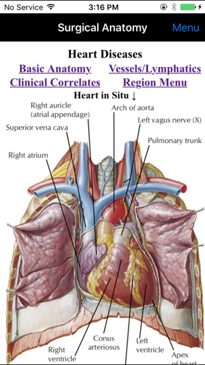 Netter\'s Surgical Anatomy Review P.R.N. on the App Store