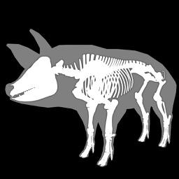 3D Pig Anatomy