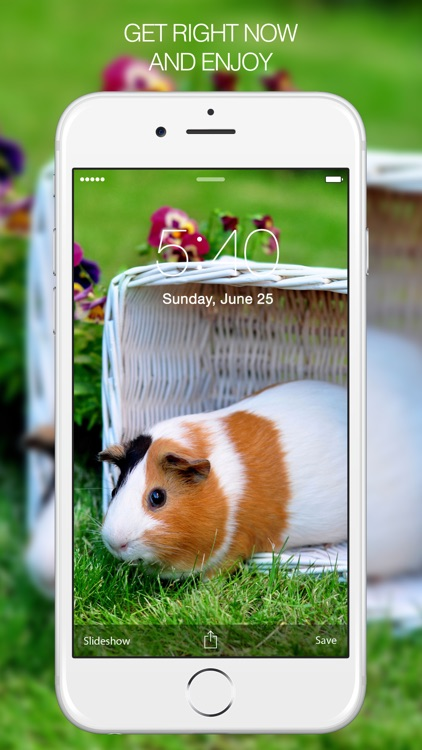 Pet Photography – Pet Pictures & Pet Backgrounds screenshot-4