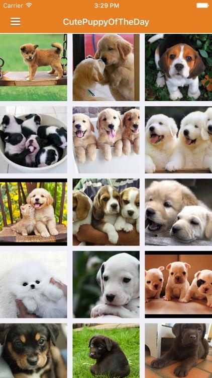 Dog News & Puppy Training Tips Pro screenshot-3