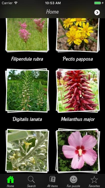 Medicinal Plants Guide