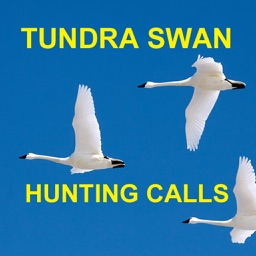 Tundra Swan Hunting Calls - BLUETOOTH COMPATIBLE
