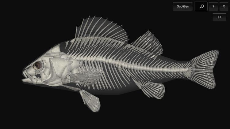 3D Fish Anatomy by biosphera.org