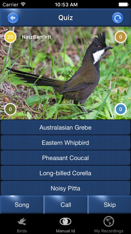 Bird Song Id Australia - Automatic Recognition screenshot-3