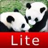 赤ちゃんパンダ Baby PANDA Lite