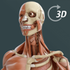 Visual Anatomy 3D | Human - GraphicVizion