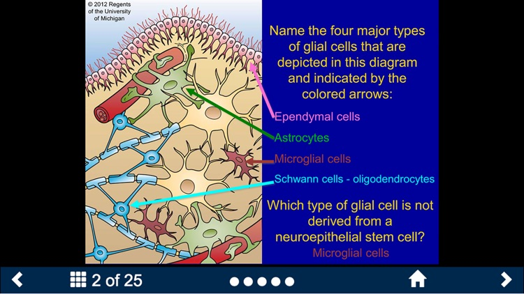Histology - Nervous System screenshot-1
