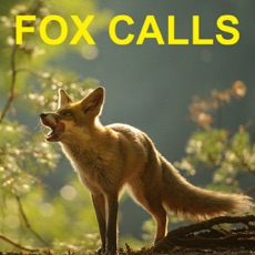 Activities of Predator Calls for Fox Hunting & Predator Hunting