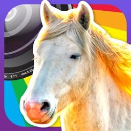 Horse Lovers Camera