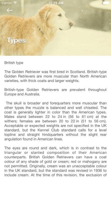 Golden Retriever: Dog Breed Guide
