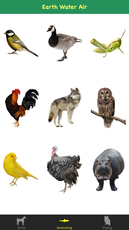 Animal Sounds For Kids & Childs
