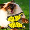 Butterfly Games for Cat