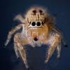 Gigabyte Solutions Ltd - Talking Spider artwork
