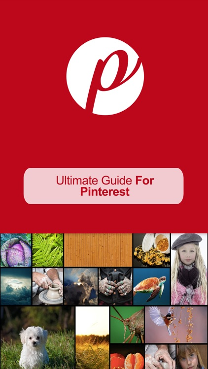 Ultimate Guide For Pinterest