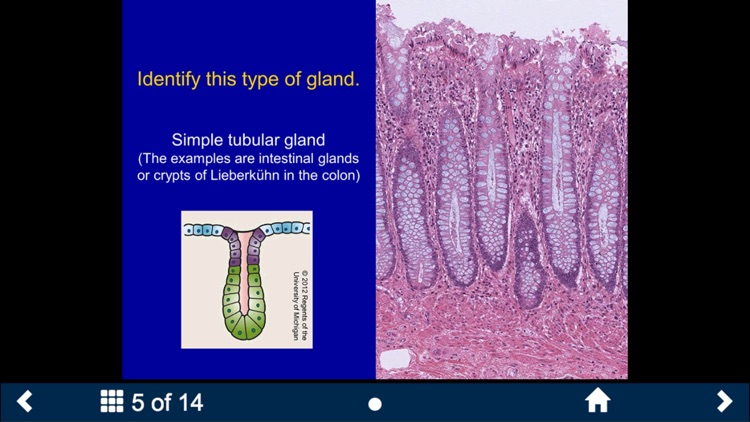 Histology Complete - SecondLook screenshot-3