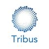 Tribus Team