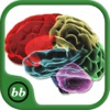 Parts of Body - Human Body Anatomy and Physiology Quiz of Bones & Muscle!