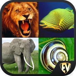 Animals Encyclopedia SMART Guide