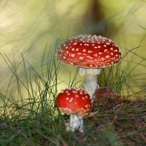 Mushroom Master