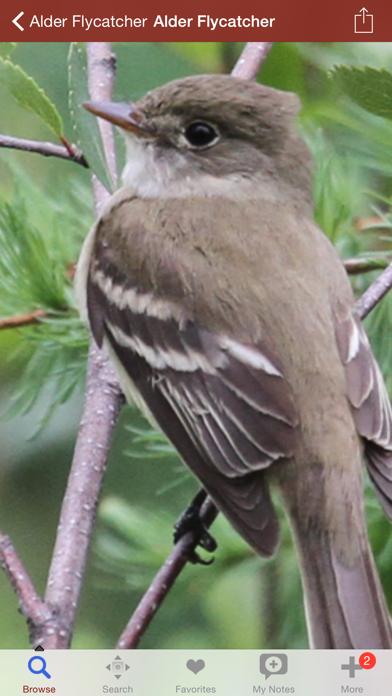 2000 鳥種。医療と解剖参照が含まれています。のおすすめ画像1