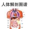 人体解剖图谱大师讲堂 - 医学名师讲解剖学