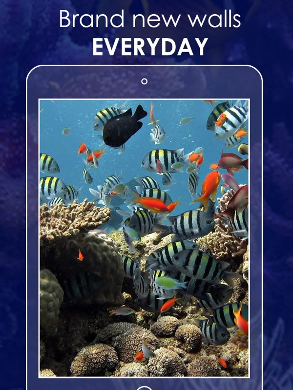 Free amazing Aquarium Wallpapers! This app is a super collection of Aquariums photos in HD quality. Use this Aquarium Wallpaper Free for your iPhone and ...