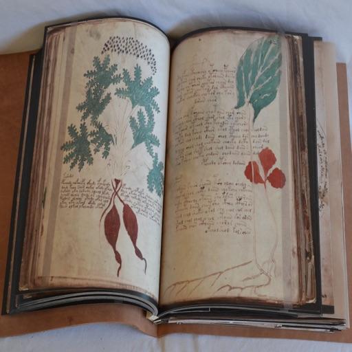 Voynich Manuscript Guide