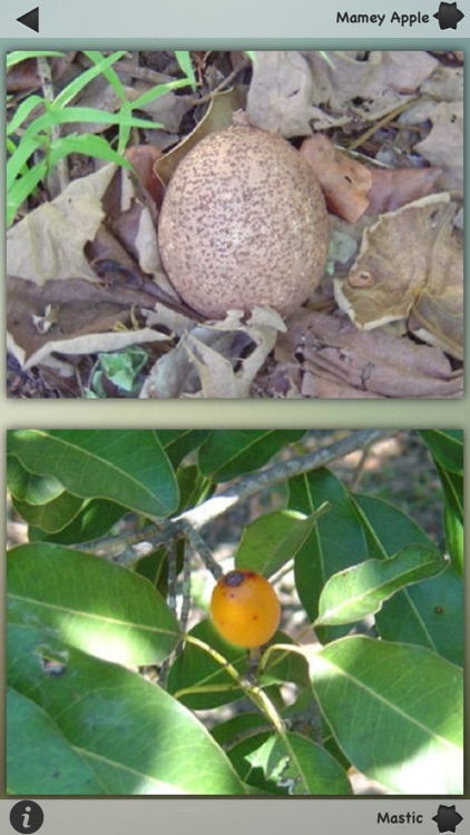 Exotic Fruits Wiki