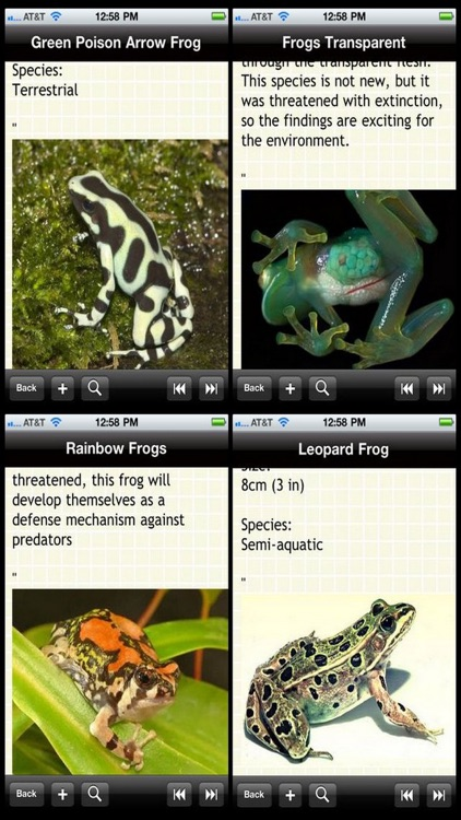 The Frogs Bible