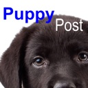 Puppy Pals Post  The all things puppy magazine