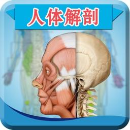 人体解剖和生理学-解剖图谱生物学考试必备