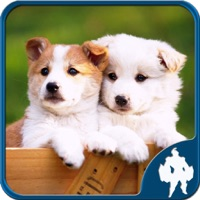 Codes for Dogs Jigsaw Puzzles - Titan Hack