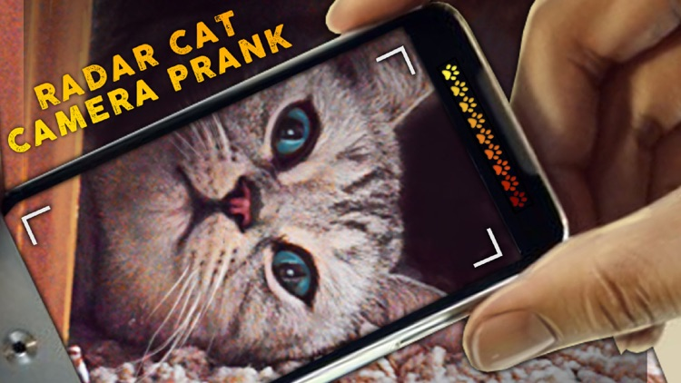 Radar Cat Camera Prank