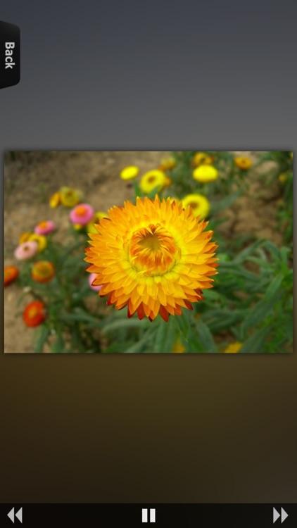 Flower Collection HD screenshot-3